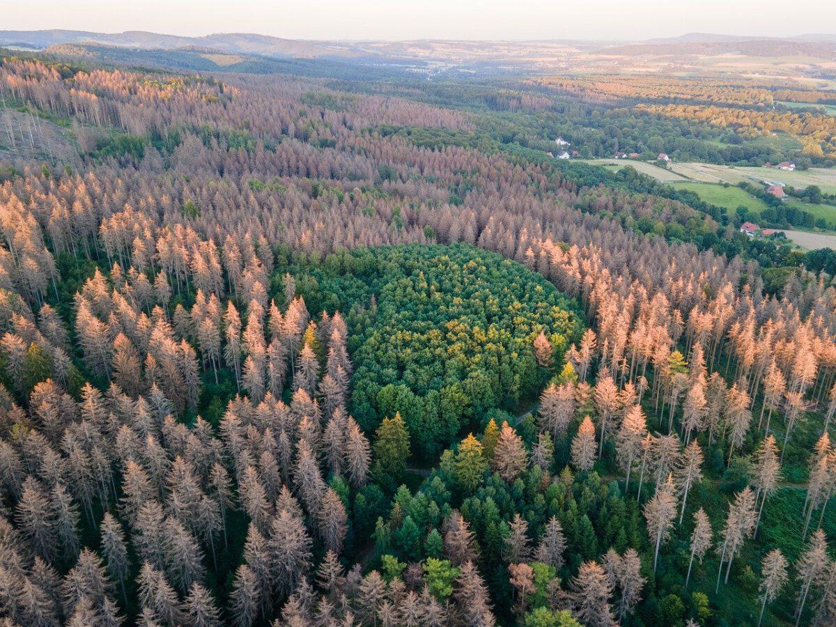 Strategien zum Walderhalt im Klimawandel
